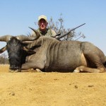 T30 Blue-Wildebeest-trophy-Max-20110820