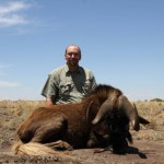 Black Wildebeest 1