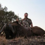 Black Wildebeest Barry 20121006