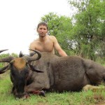 Blue Wildebeest hunter trophy 20111223