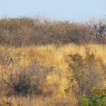 Kudu's left and right 20110723